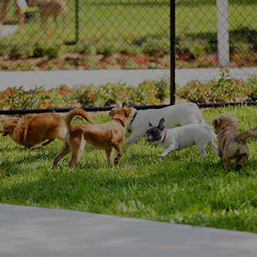 Large Dog Park at Eastbrook Apartments